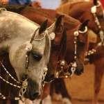 spettacoli equestri